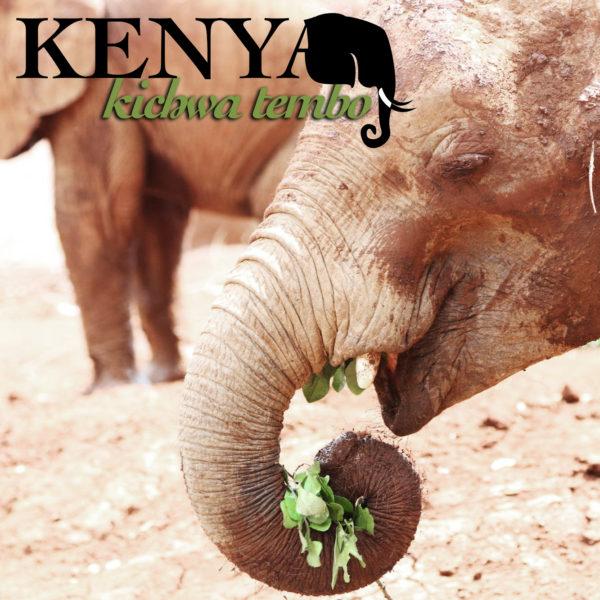 Kenya AA Kichwa Tembo, elephant head