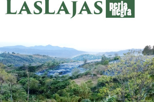 Costa Rica Las Lajas - Perla Negra - Black Pearl coffee